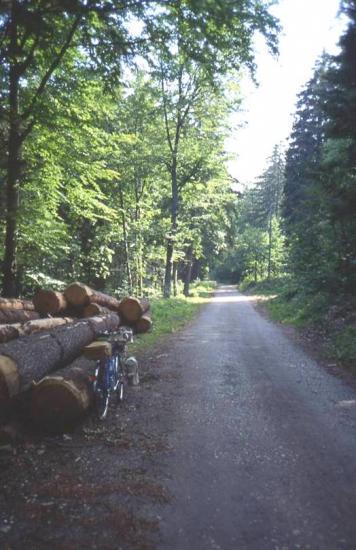 1992 quelque part dans la forêt Suisse